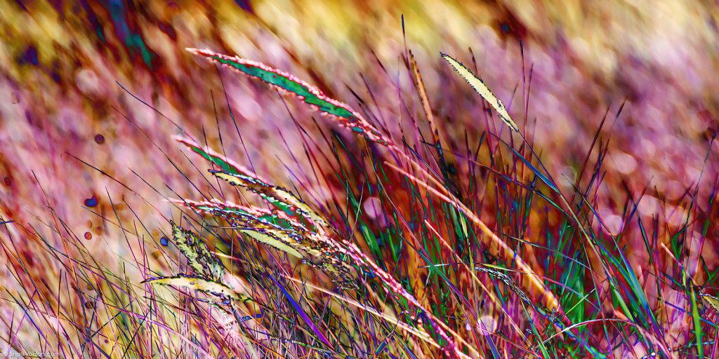 Rote Gräser