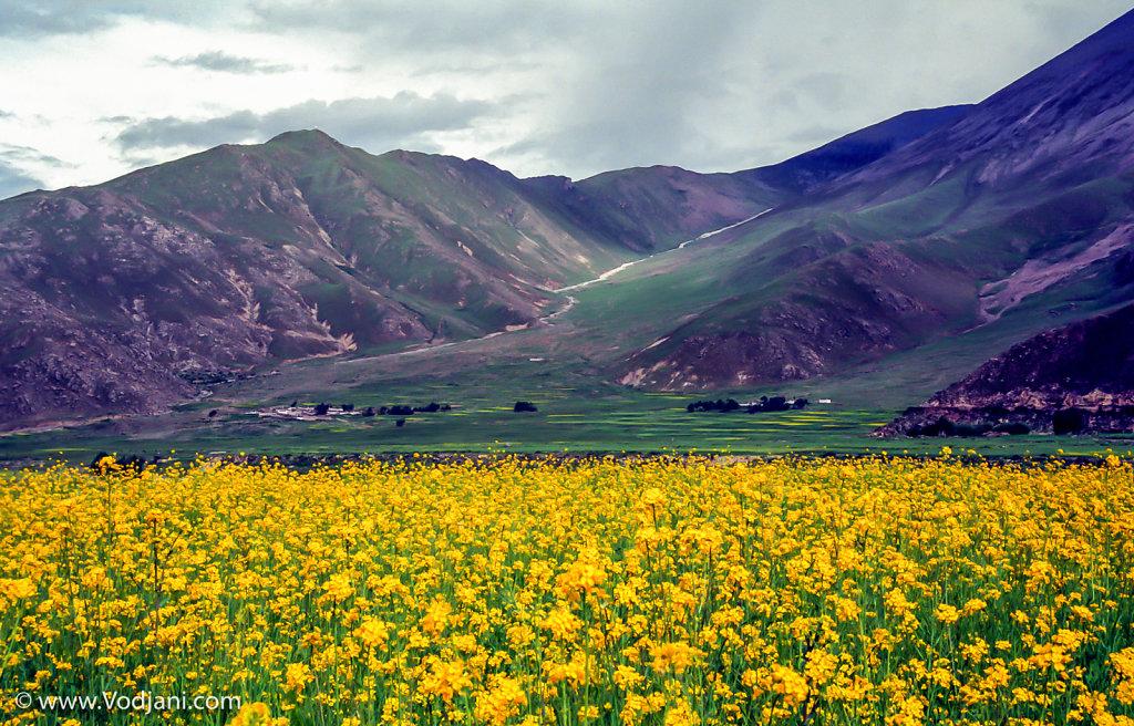 Tibet Ladscape
