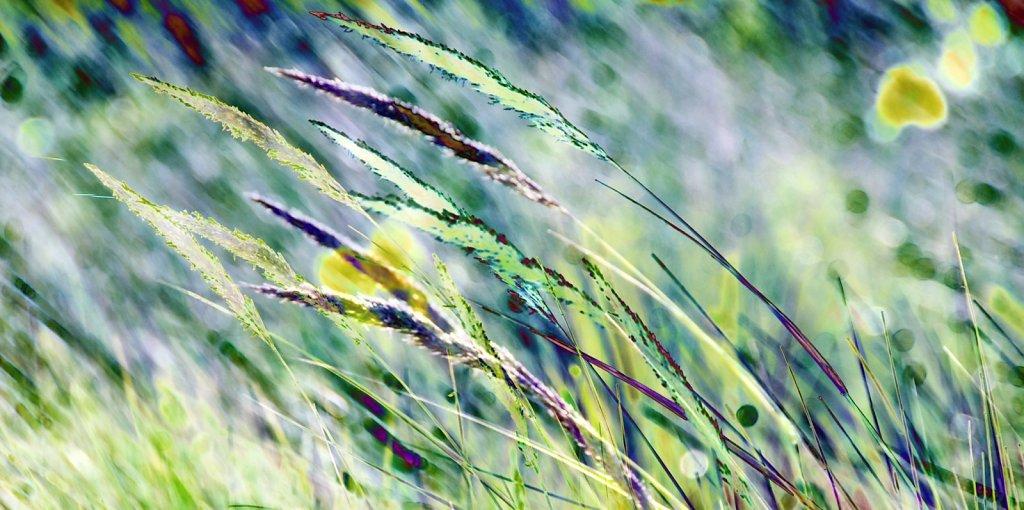 Grüne Gräser